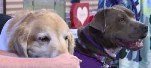 Local nonprofit celebrates 'doggy' Valentine's Day wedding [Video]