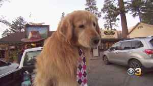 CBS3 Pet Project: Increase In Studies On Canine Cognition Due To Dogs' Intelligence [Video]