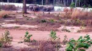 Wild elephants smash through concrete wall to reach jungle in Thailand [Video]