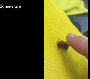 Bumble bee gives woman a 'high five' in UK [Video]