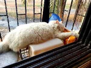 News video: cat after a warm bath