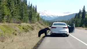 Tourists Taunt Black Bear for Photo Opportunity [Video]