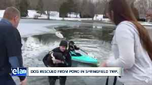 Watch: Springfield Township police officer rescues dog from icy pond, reunites her with family [Video]