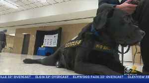 Meet Browser, The Electronics-Sniffing Dog Who's Helping Lake County Authorities [Video]