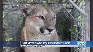 Girl, 6, Attacked By Mountain Lion [Video]