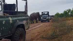 Elephant intercepts safari convoy and snatches food from holidaymakers in Sri Lanka [Video]