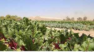 Climate-change-resistant agriculture [Video]
