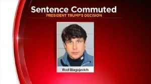 President Trump Commutes Former Gov. Rod Blagojevich's Sentence [Video]