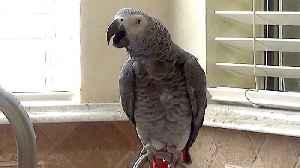 Talking parrot invents unique name for the color orange [Video]