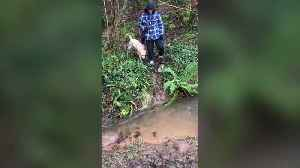 'Show-off' dog owner tries to leap across flooded path - falls in mud instead [Video]