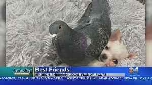 Trending: Puppy & Pigeon Are Best Buddies [Video]