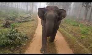 Elephants Charge At Moving Vehicle Carrying Tourists [Video]