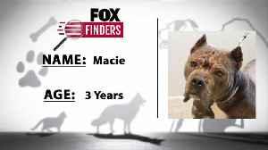 FOX Finders Pet Finder - Macie [Video]