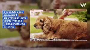 13 Ways to Pamper Your Pet (Love Your Pet Day) [Video]