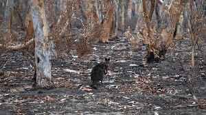 Australia Opens Federal Inquiry Into Deadly Bushfire Season [Video]