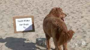 Bring your dog to the beach this Saturday! [Video]