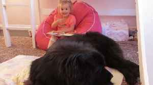 "Toddler ""reads"" Cinderella to her giant dog and it's hilariously adorable [Video]"