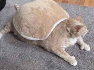 Cat's 'turtle shell' blanket perfectly matches his fur color [Video]