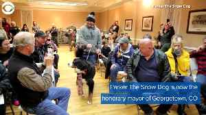 WEB EXTRA: Dog Sworn In As Honorary Mayor [Video]