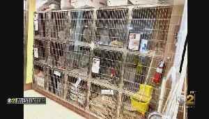 Concerns Over Cat Deaths [Video]
