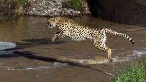 Wildlife Photographer Captures Animals In Mid-Air [Video]