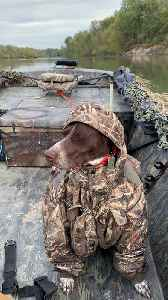 German Short-Haired Pointer Doesn't Let Cold Weather Ruin His Hunt [Video]