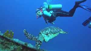 Friendly sea turtle swims straight to scuba divers for a face to face look [Video]