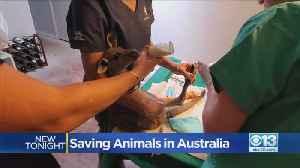 UC Davis Vet Helped Save Animals In Australia [Video]