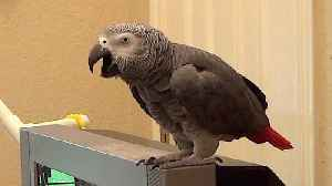 Talking parrot and his owner have a humorous bathroom conversation [Video]