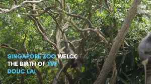 New baby animals at Singapore's wildlife parks - In The Know Singapore [Video]