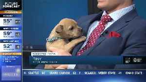 Little 'Tiny' is ready to find a loving home to call his own [Video]