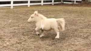 Team of Mini Rescue Horses Bring Smiles to Those in Need [Video]