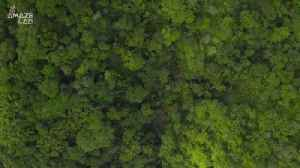 The World's Deadliest Tree Creates 'Toxic Rain' [Video]
