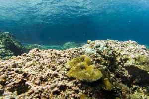 Coral Reefs Will Be Gone by the End of the Century, Report Says [Video]