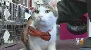 Oh My Goodness: New Jersey Teen's Little Bow Ties Helping Put Animals' Best Paw Forward For Adoption [Video]