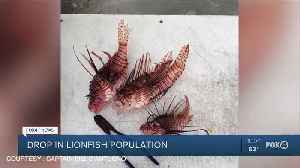 Drop in Lionfish population [Video]