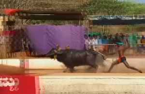 Buffalo-racer dubbed India's Bolt says no to national trials [Video]