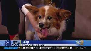 Furry Friend Finder: Chip And Simba Need Forever Homes [Video]