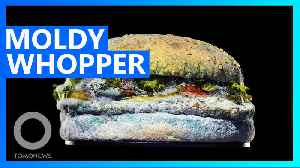 News video: Burger King uses moldy Whopper to promote its signature product