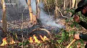 Grass fires add to air pollution in northern Thailand [Video]