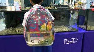 Schoolboy carries his pet birds in special backpack [Video]
