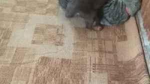 My cat vs my dog [Video]