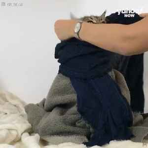 Watch as Yves, the cat, sports her different kinds of blankets [Video]