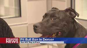 Denver City Council Can't Overturn Mayor's Veto Of Pit Bull Ban Reversal [Video]