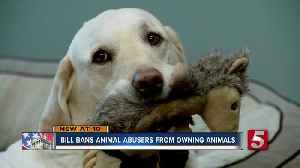 Bill could ban animal abusers from owning pets again [Video]