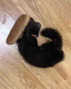 Rescued Sable (marten) adorably plays with a loaf of bread [Video]