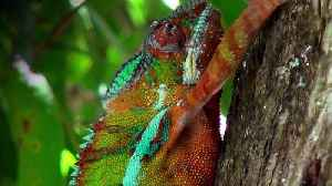Madagascar 3D movie [Video]