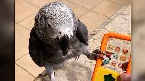 Einstein the talking parrot gets very annoyed with telemarketers [Video]