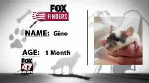 FOX Finders Pet Finder - Gino [Video]