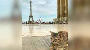Meet the Traveling Cat Who Has Probably Visited More Famous Places Than You [Video]